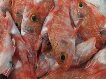 Rotbarsch,Cantarilho,Red fish,Fisch,Peixe,Martins-Kulinarium,Algarve,Portugal