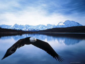 """""""spread your wings"""" mit Bryan Gall - flute"""