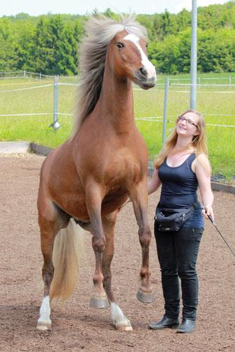 Mein erstes eigenes Pferd - endlich Pferdebesitzer