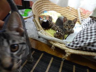 猫ちゃんのお写真、撮るの難しいです!すみません( ;∀;)