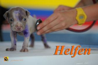 www.tiere-aus-andalusien.com/helfen