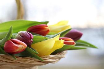 チューリップの花束 Gundula VogelによるPixabayからの画像