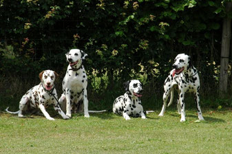 Bella mit 3 Enkeln ( Töchter der unvergessenen Tilde ) v.l.: Fae-Shani, Bella, Flair und Florentina