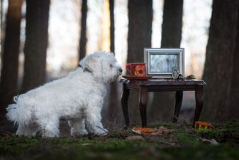 Escaperoom voor honden 2019 workshop met je hond dogcoach