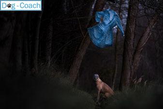 Escaperoom hond 2019 nieuw dogcoach hondenworkshop