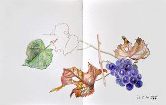 色鉛筆画 生徒作品