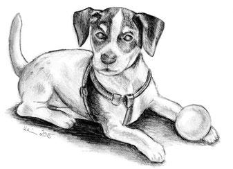 Bleistiftzeichnungen Von Amy Mydogandmore Webseite
