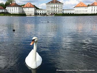 Tourisme en Bavière: Cygne sur les bassins du parc du palais de Nymphenburg à Munich