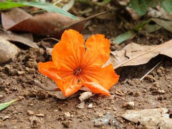 Eine einzelen, orangne Blume liegt auf einem erdigen Boden. Das Bild zeigt das Element Erde.