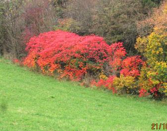 Heroldsberg: nördl. Kalchreuth: die Farben des Herbstes