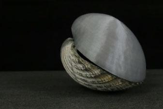 3D-Druck Dienstleistung exp. 3D-Scannen Beispiel Muschel