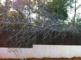 Árbol caído sobre la pared de una casa