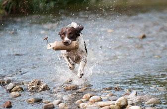 Im Hundeinternat lernt der Hund schlechtes Benehmen abzulegen