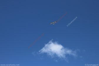 Zarahzetas Lebenskunst mit Möwe am blauen Himmel