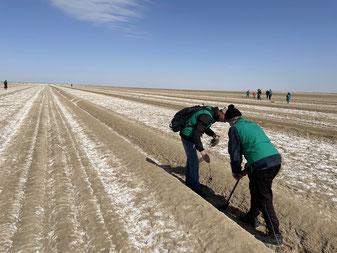 """アラル海での植林の様子。白く見えるのは、土中からふき出している塩。ここからまきあがる砂嵐は、塩分を含む""""塩嵐""""となる。"""
