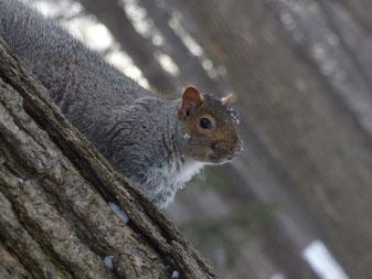 Séance photos et partie de cache-cache avec les écureuils.