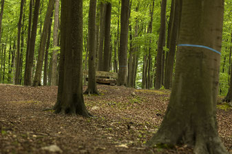 Wald; Herbst;