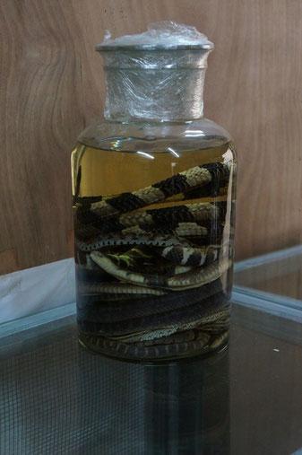 Eingelegte Schlangen.