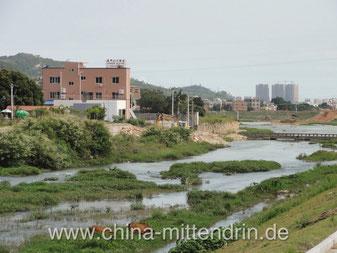 Ein Fluss am Stadtrand von Xiamen, Südostchina. Das ist Südostchina. Kühe grasen im Flussbett, Hügel und im Hintergrund das Meer.