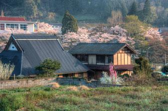 Furumaya na primavera