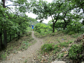 Trailrunning Traumschleife Hasenkammer