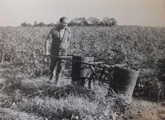Un homme sortant des vignes des portoires de raisins