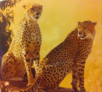 Crédit Photo: La Grande Encyclopédie Des Animaux (Terres Editions)