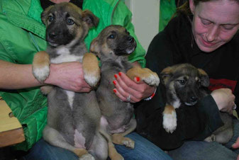 Dina, Dixon und Daisy (von links nach rechts)