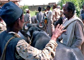ein tibetischer Viehhändler sehr selbstsicher
