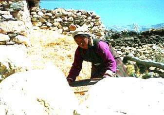 Tibeterin beim sieben der Gerste-Sieb