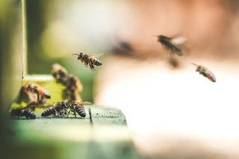 Imkerverein Burglengenfeld wächst um Mitglieder und Bienenvölker