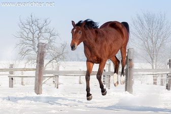 Pferdeshooting, Pferdefotografie, Winter, Eva Richter, Fotografie
