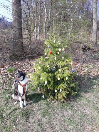 Blade sitzt am Waldrand neben einem Tannenbaum, der mit Ostereiern geschmückt ist.