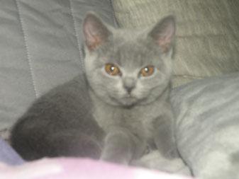 Cleo (geb. 8.8.2013) Foto: 15 Wochen alt