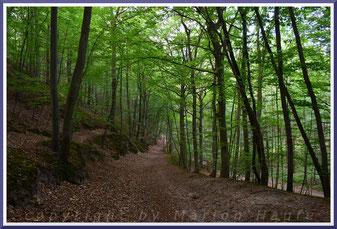 Im Wald bei Göhren.
