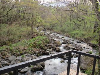 ゆと森倶楽部「川の湯」から。朝の新芽が綺麗です