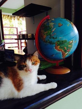 Dominical Mavi Hotel cat
