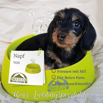 Reico's schöner Hundenapf aus pflegeleichtem Styrolux ist nicht nur leicht zu reinigen, sehr groß und schön tief, damit nicht so leicht etwas überschwappt.