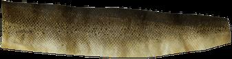 Fischleder - Lachsleder