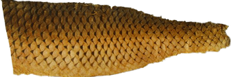 Fischleder - Karpfenleder