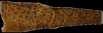 Fischleder - Seewolfleder