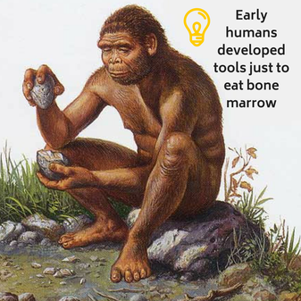 Stone tools enabled early humans to get their hands on food sources that other animals couldn't easily obtain like bone marrow.