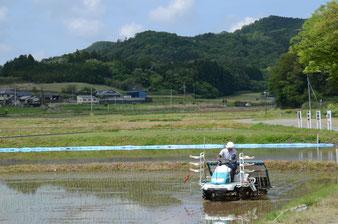 庵田米の田植え。耕作者は農業委員として活躍されている潮田さん。