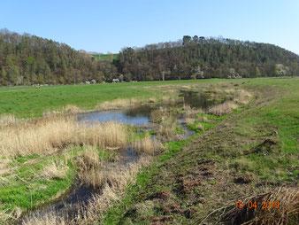 Bedeutendes Sekundärbiotop, Hochwasserentlastungsrinne Albungen