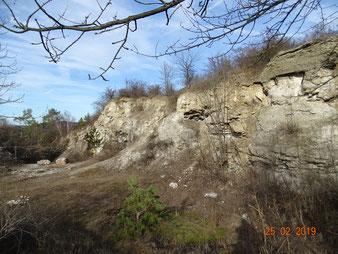 Viele Sekundärbiotope, hier aufgelassener Steinbruch