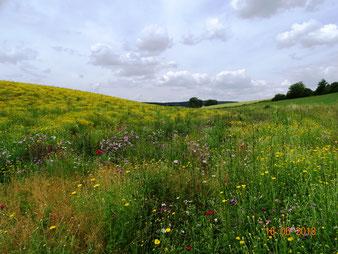 Landwirtschaftliche Blühflächen, Ackerrandstreifen, Meilensteine eines Umdenkens in der modernen Landwirtschaft?