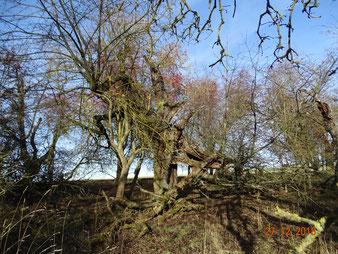 Wildwuchs, Totholz und unberührte Nischen, bedeutende Refugien für Artenvielfalt
