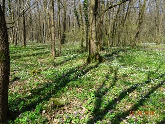 Hoher Artenreichtum in vielfältigen Waldtypen