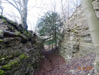 Felslandschaften und seltene Baumarten