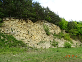 Viele Sekundärbiotope / aufgelassene Steinbrüche